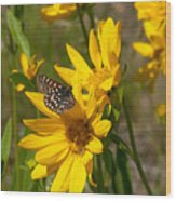 Butterfly On Mule's Ear Wood Print