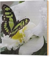 Butterfly On Orchid Wood Print