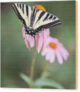 Butterfly On Pink Cone Flower Wood Print