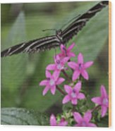 Butterfly On Pink Flowers Wood Print