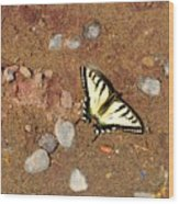 Butterfly On The Beach Wood Print
