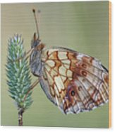 Butterfly On The Grass Wood Print