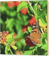 Butterfly On The Red Flower 2 Wood Print