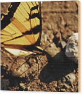 Butterfly On The Rocks Wood Print