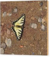 Butterfly On The Sand Two  Wood Print
