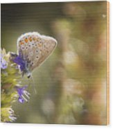 Butterfly On The Spot Wood Print
