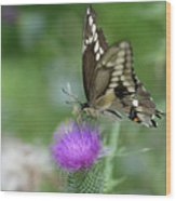 Butterfly On Thistle Flower Wood Print