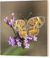 Butterfly On Verbena Wood Print
