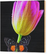 Butterfly On Yellow Pink Tulip Wood Print