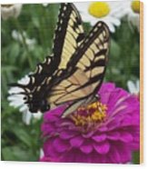 Butterfly On Zennia Wood Print