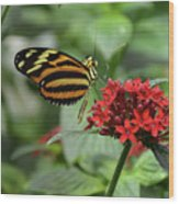 Butterfly Orange And Yellow Wood Print