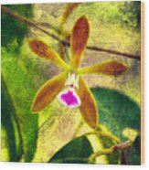 Butterfly Orchid - Encyclia Tampensis Wood Print