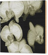 Butterfly-orchids Wood Print