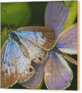 Butterfly Pair Wood Print