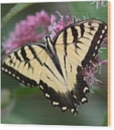 Butterfly Paradise  Wood Print
