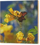 Butterfly Pollinating Flowers  Wood Print