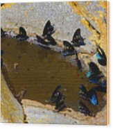 Butterfly Pool Wood Print