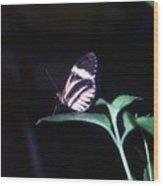 Butterfly Portrait Wood Print