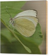 Butterfly Profile Wood Print
