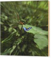 Butterfly Race Wood Print