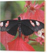 Butterfly Blush Wood Print