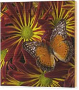 Butterfly Resting On Chrysanthemums Wood Print