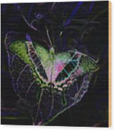 Butterfly Rws Work Number Two Wood Print