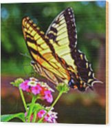 Butterfly Series #8 Wood Print