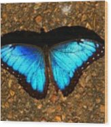 Butterfly Shadow Wood Print