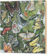 Butterfly Sightings Wood Print