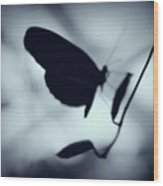 Butterfly Silhouette  Wood Print