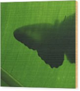 Butterfly Silhouette On Leaf Wood Print