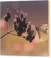 Butterfly Spirit #03 Wood Print by Loriental Photography