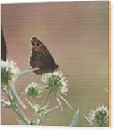 Butterfly Spring Nature Morning Scene Wood Print