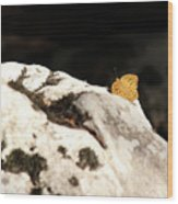 Butterfly Standing On Rock Wood Print