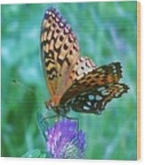Butterfly Stare Wood Print
