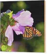 Butterfly Sunset Wood Print by Betty LaRue