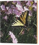 Butterfly Surprise Watercolor Wood Print
