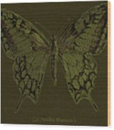 Butterfly Swallow Tail Wood Print