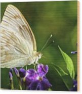 Butterfly Tea Time Wood Print