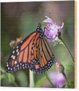 Butterfly - The Monarch  Wood Print