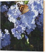 Butterfly V Wood Print