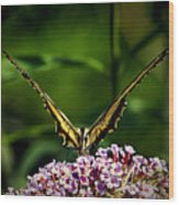 Butterfly Victory Wood Print