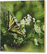 Butterfly Wall Decor Wood Print