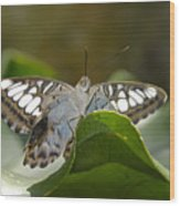 Butterfly Watching Wood Print
