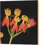 Butterfly Weed Wood Print