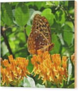 Butterfly Weed Fritillary Wood Print