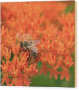 Butterfly Weed Heaven Wood Print