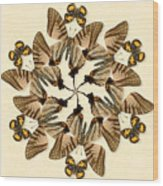 Butterfly Wheel Dance Wood Print