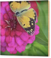 Butterfly Whispers Wood Print